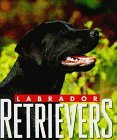 Click link to order Labrador Retrievers